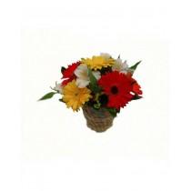 Arranjo de flores Beleza de Gérberas para presente