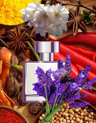perfume fougère para presente
